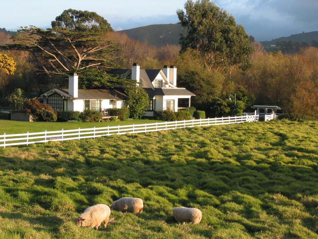 藍天白雲下,青無際的大草原,小羊兒在青草上奔跑、歇息,眼前就是一幅活生生的圖畫,不少遊人都跟我一樣,樂於成為圖畫中的主角。